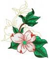 Dogwood Blossom #2