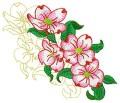 Dogwood Blossom #8.