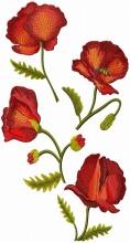 Wild Poppies 200 x 360