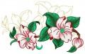 Dogwood Blossom #1.